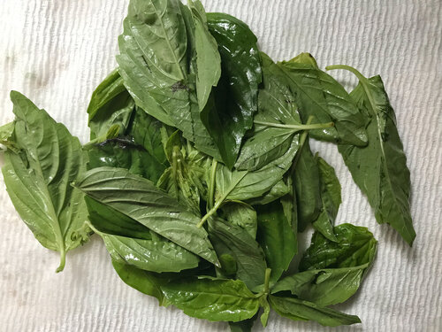 Fresh basil leaves, washed and removed from the stem - drying atop a paper towel.